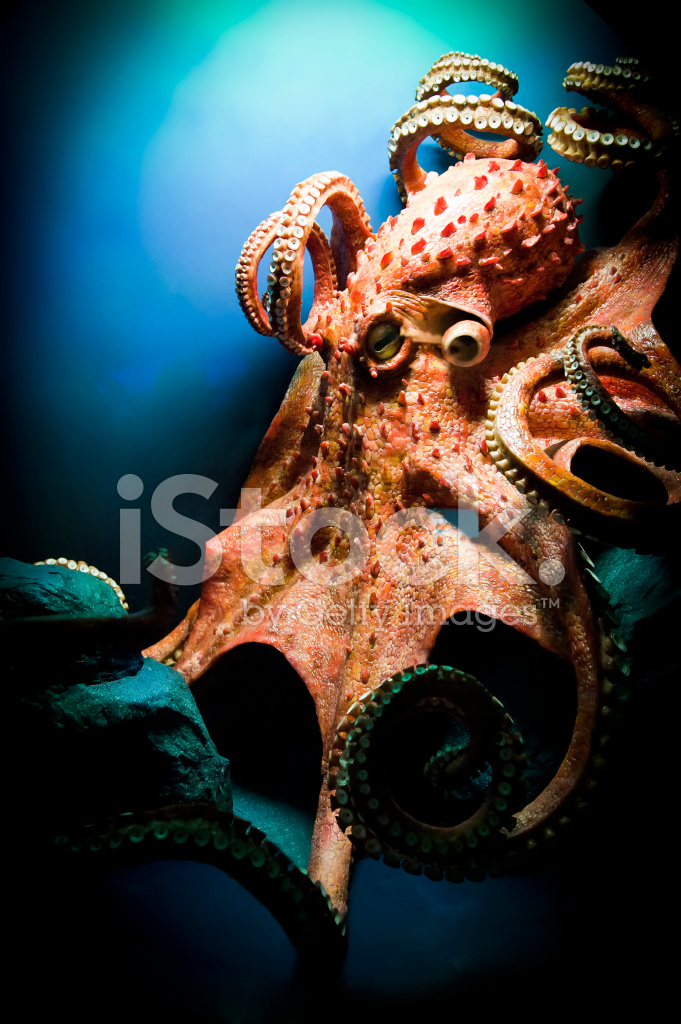 Scary Giant Octopus Stock Photos Freeimages Com