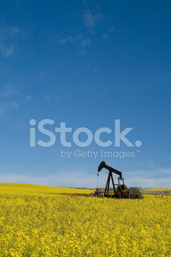 Olja Industri Pumpjack I Raps Fält Stockfoton Freeimagescom