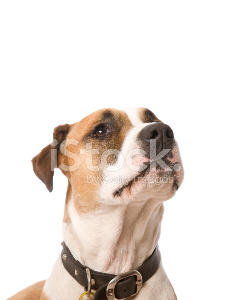 动物的简笔画 dog