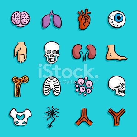 Iconos DE Dibujos Animados Anatomía Stock Vector - FreeImages.com