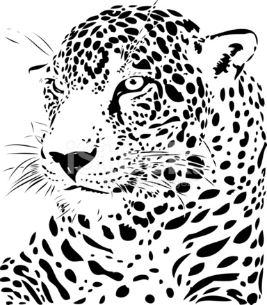 Jaguar Illustration B&w Stock Vector - FreeImages.com