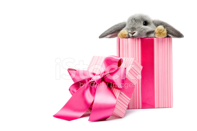 В подарок животное 36