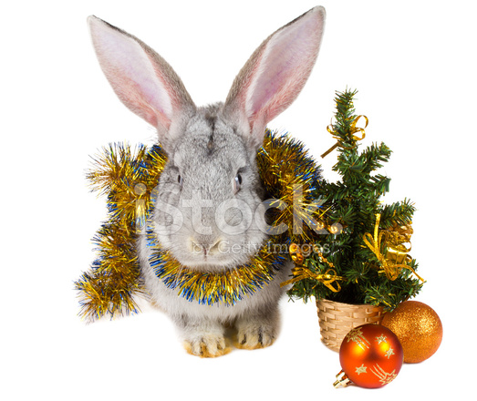 gray rabbit and christmas decorations
