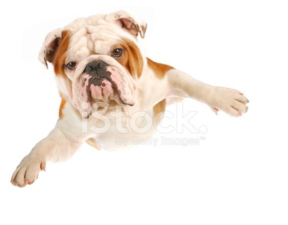 Chien Volant chien volant photos - freeimages