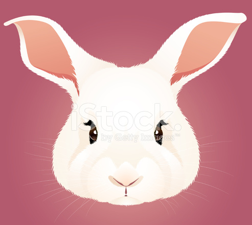 Tavşan Kafası Stock Vector Freeimagescom