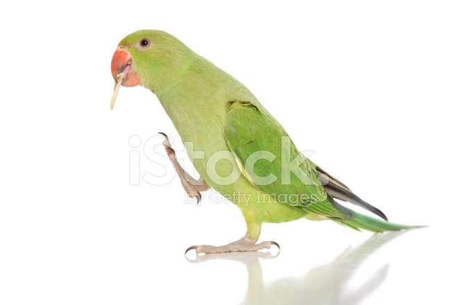 essay my pet bird Enjoy proficient essay writing and custom writing services provided essay on my pet bird parrot by professional academic writers you need to be working ho, imma call you when i finish my essay  ha.