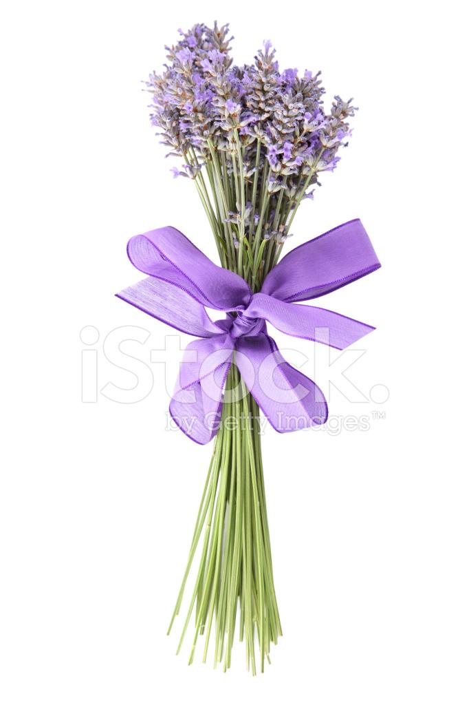 Bos Van Lavendel Op Witte Achtergrond Stockfoto S