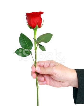 Рука мужчины с цветком и женская рука 78