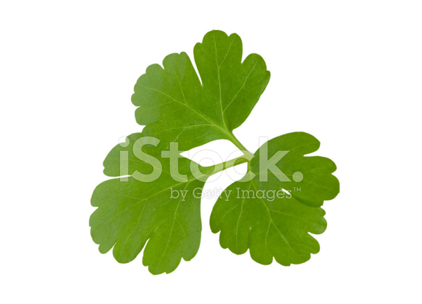 Parsley Leaves Stock Photos - FreeImages.com