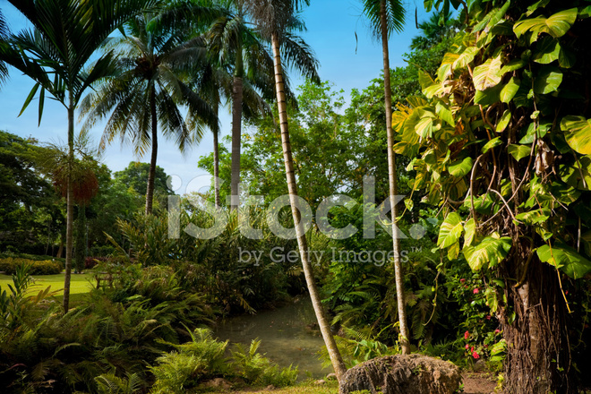 Giardino tropicale with giardino tropicale - Giardino tropicale ...