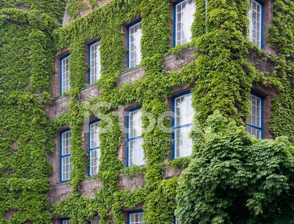 Overgrown House Facade Stock Photos Freeimages Com