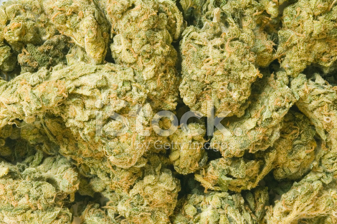 Марихуаны фото шишки марихуана подстричь