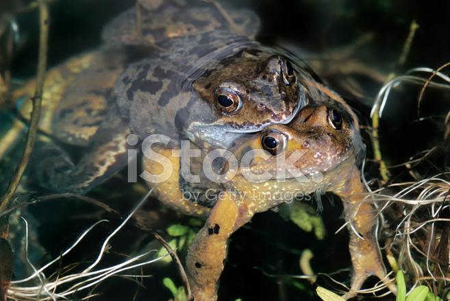 Frogsex Cm 99
