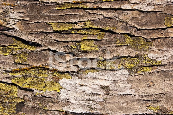 Natural Rock Faces : Natural abstract lichen on rock face stock photos