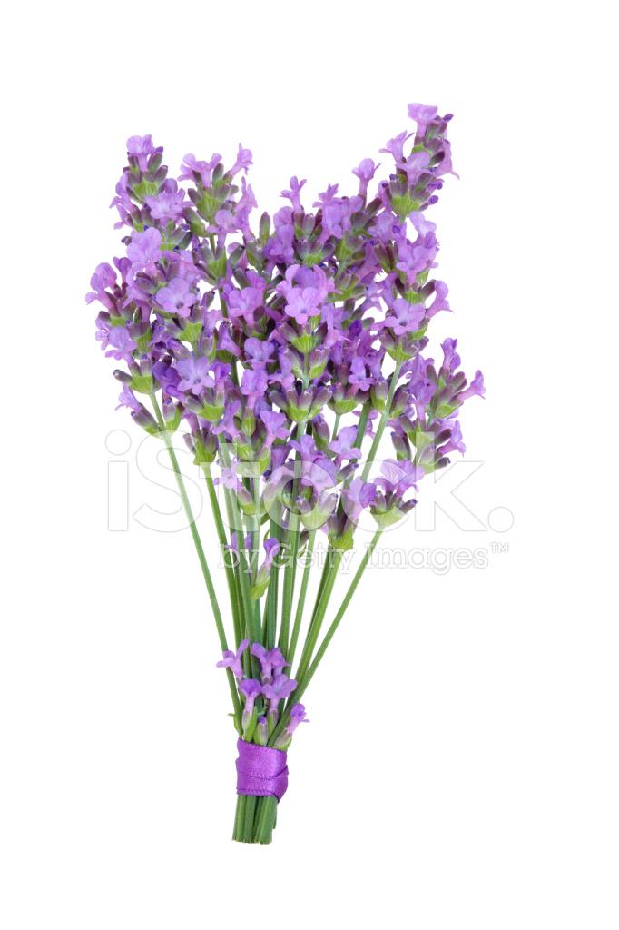 Lavender Herb Flower Posy Stock Photos - FreeImages.com