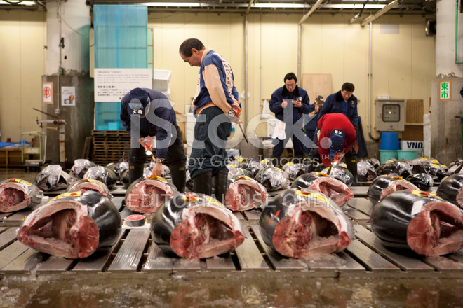 Fish Buyers Inspect Tuna Quality AT Tokyo Fishmarket Stock Photos