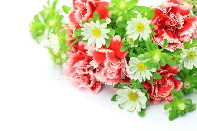 Nelken UND Weiße Blume Stockfotos - FreeImages.com