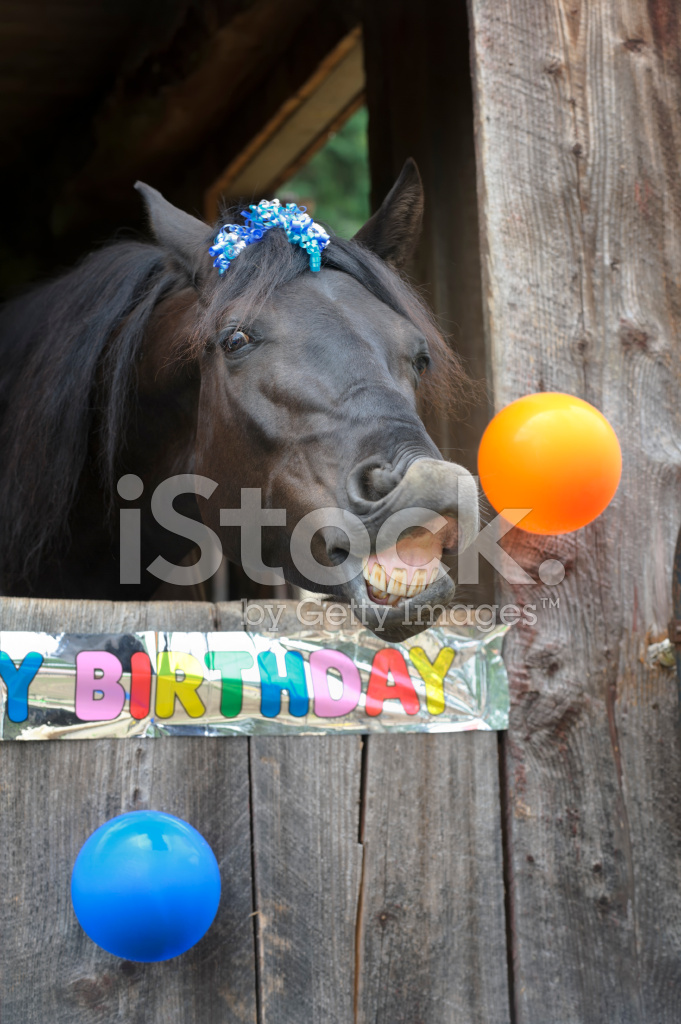 Birthday Party Horse Portrait Toothy Grin