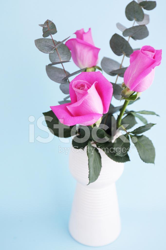 Rami Di Eucalipto Rose Rosa In Vaso Bianco Con Sfondo Blu Fotografie