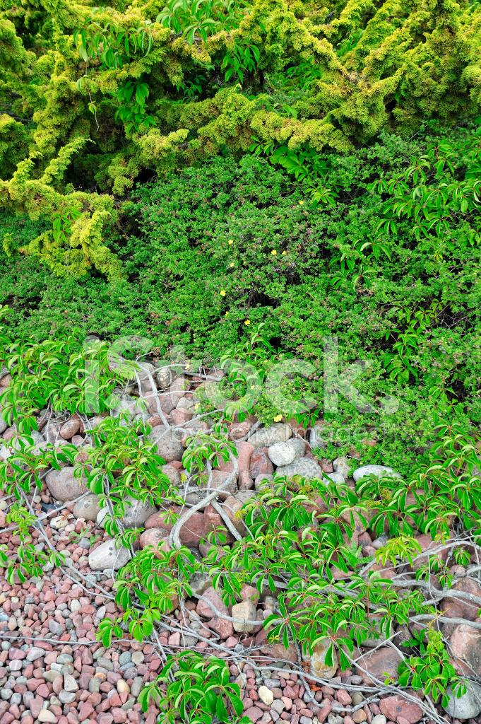 Landscape With Pebbles and Bush Stock Photos - FreeImages com