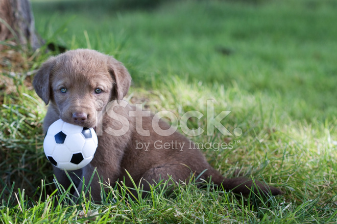 Image result for puppy with toy