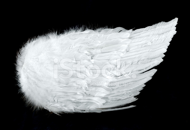 Angel Wings Side View Isolated On Black Stock Photos