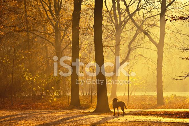 hund i parken p morgonen tiergarten berlin stockfoton. Black Bedroom Furniture Sets. Home Design Ideas