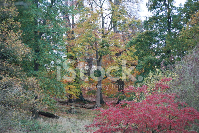 Herbst Farbpalette Stockfotos Freeimages Com