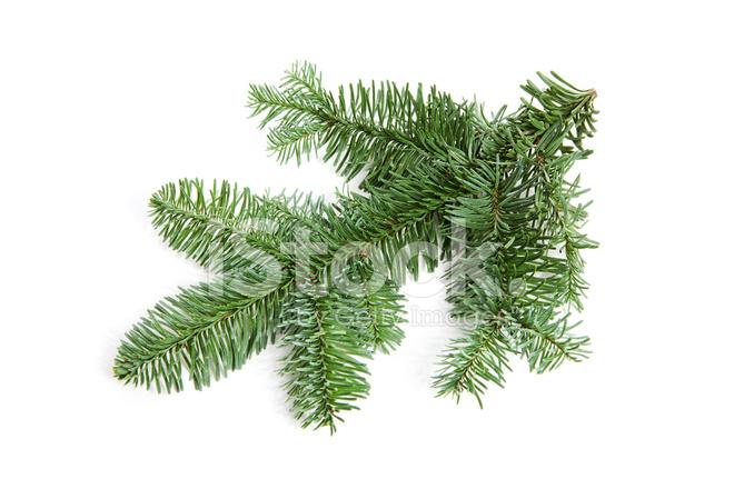 nackte weihnachten zweig stockfotos