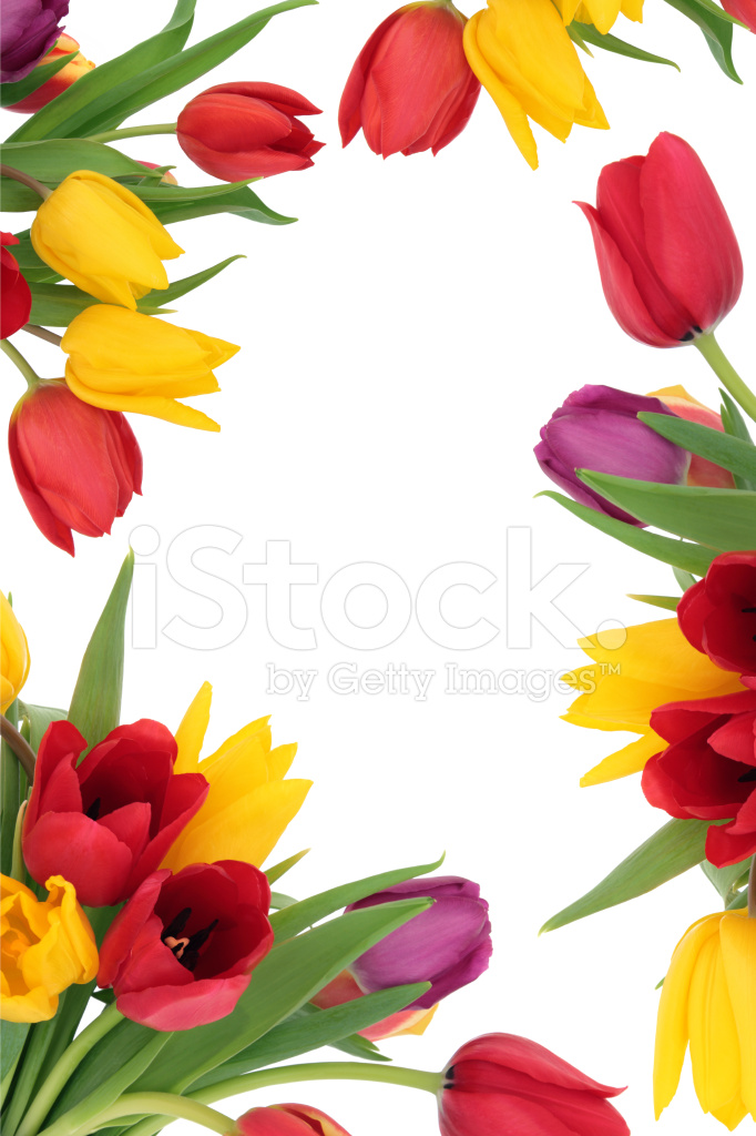 Tulip Flower Border Stock Photos - FreeImages.comTulips Page Borders Clipart Free