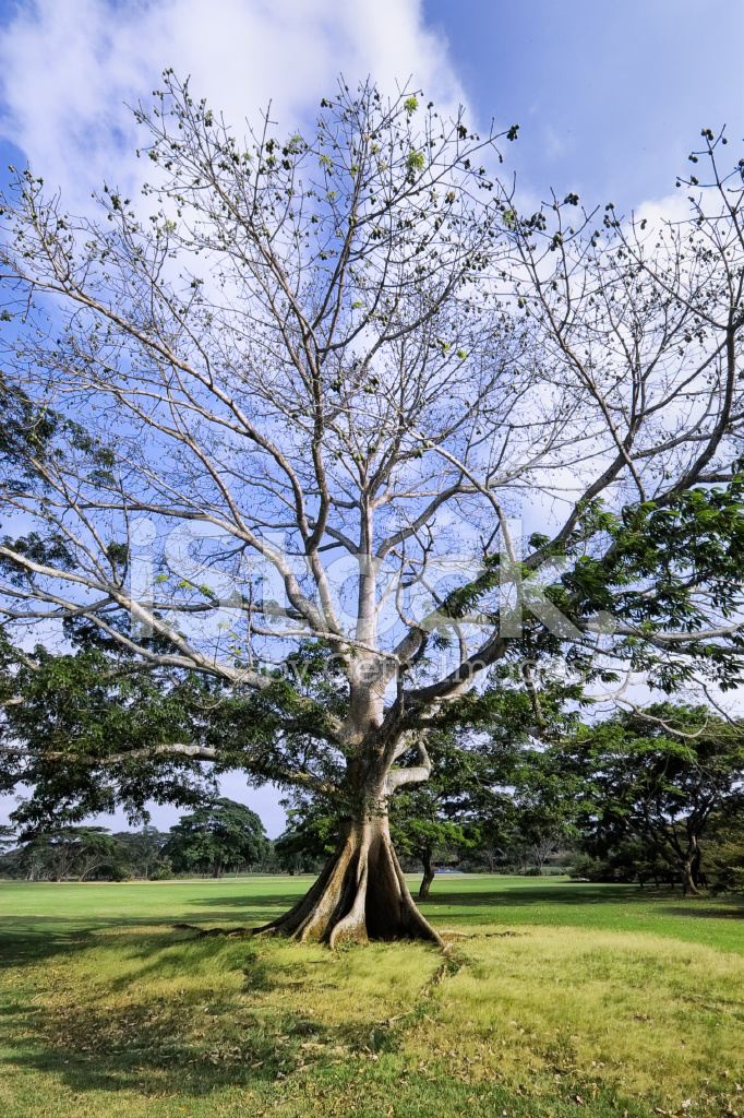 Schöne Baum Im Tropischen Garten Stockfotos - FreeImages.com