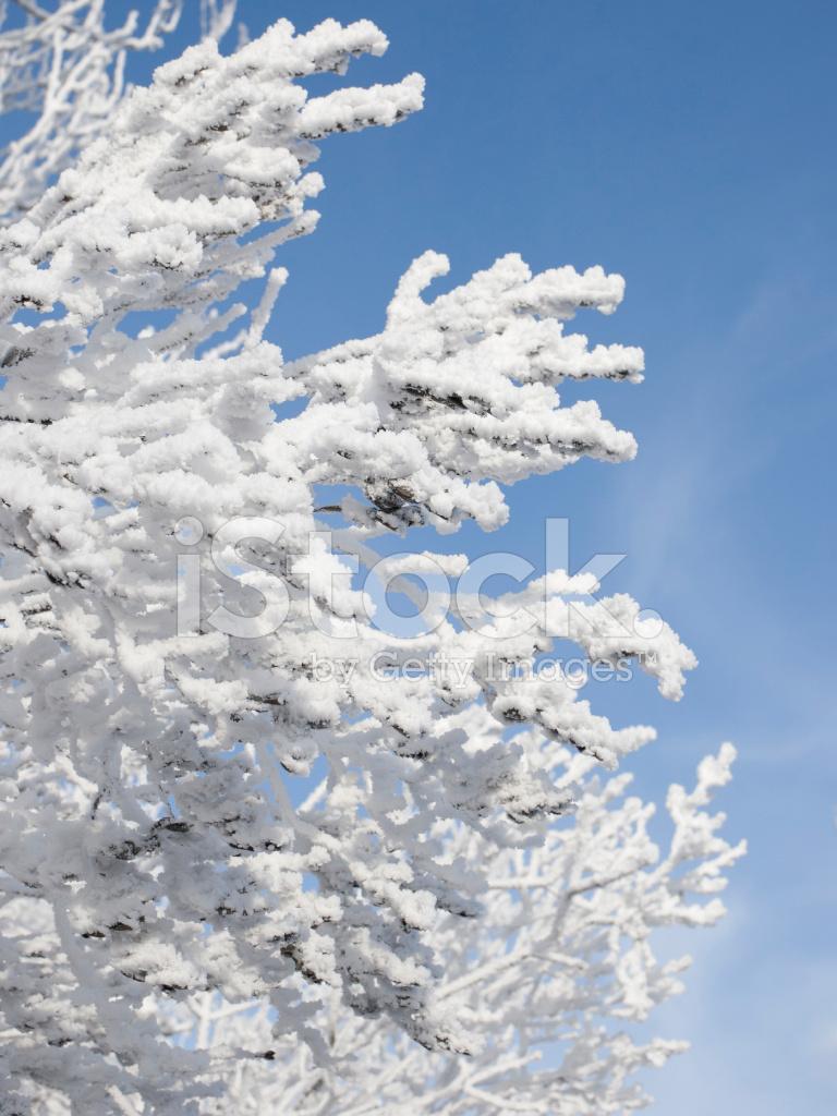 Картинки с сиренью зимой