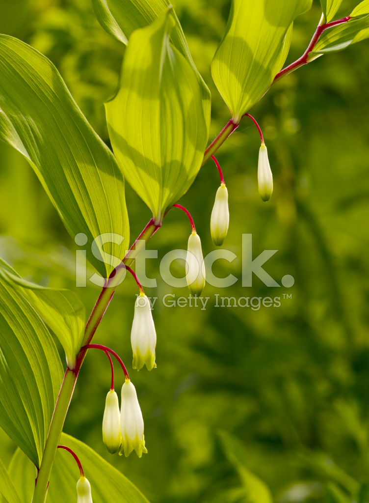 White meadow flowers stock photos freeimages premium stock photo of white meadow flowers mightylinksfo