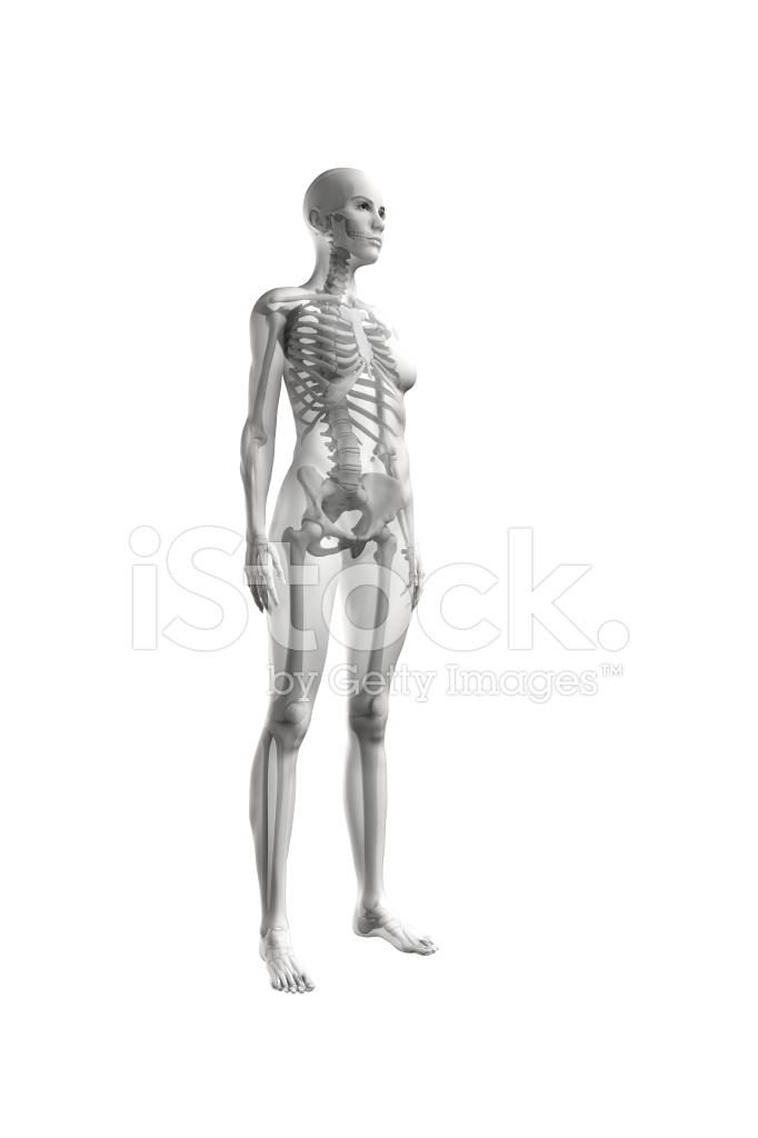 Transparente Weiblichen Körper MIT Skelett Stockfotos - FreeImages.com