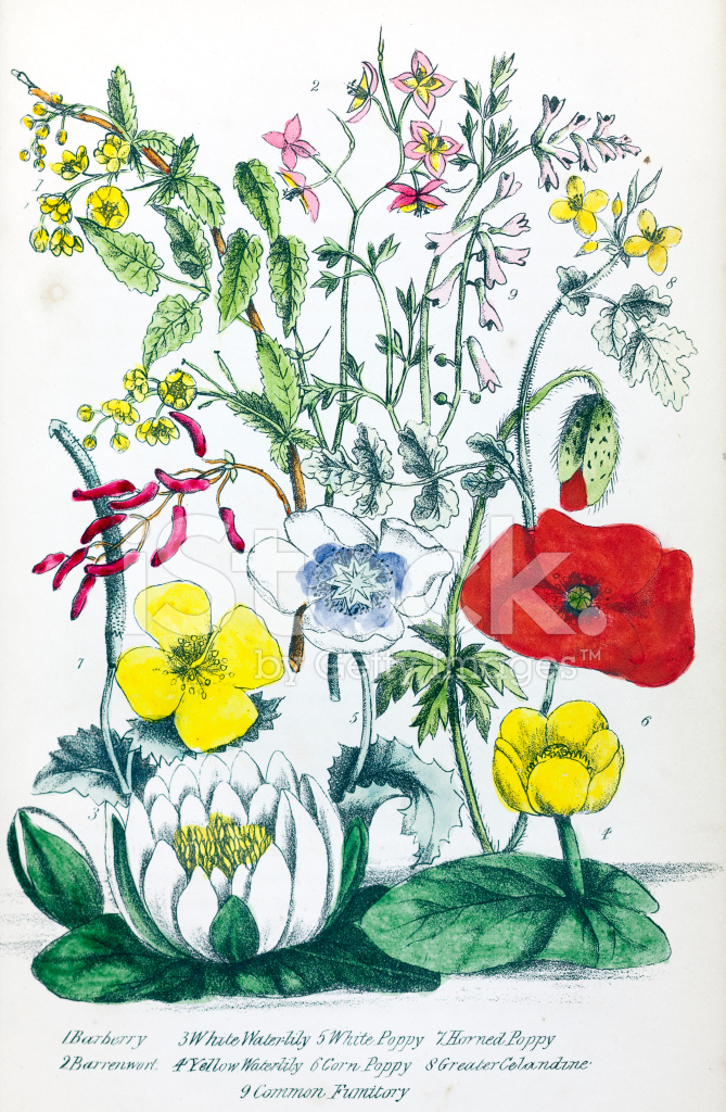 Premium Stock Photo Of Victorian Flower Illustration