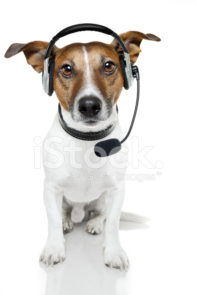 Cat Dog Games  Player