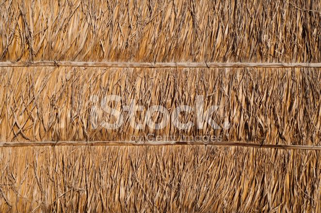 Fotos de palmas secas 98