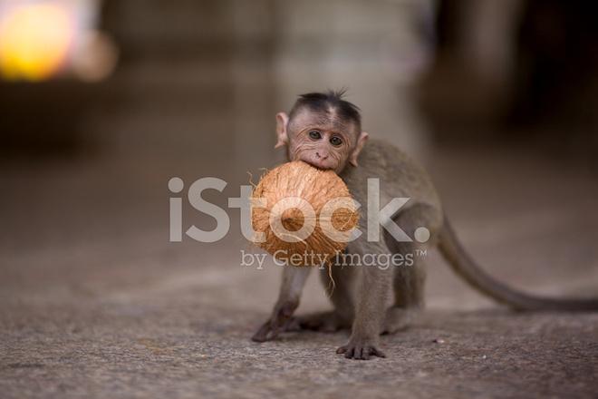 обезьяна для рыбалки
