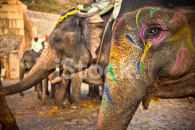 在斋浦尔印度大象