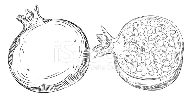 Dibujos Detallados DE Granada Stock Vector - FreeImages.com