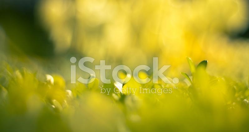 Sfondo Di Luce Verde Natura Fotografie Stock Freeimagescom