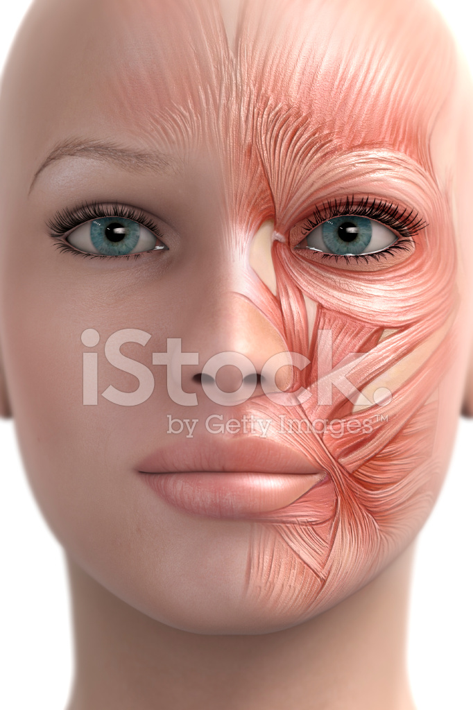 Mimic Muscle Of The Face Stock Photos Freeimages