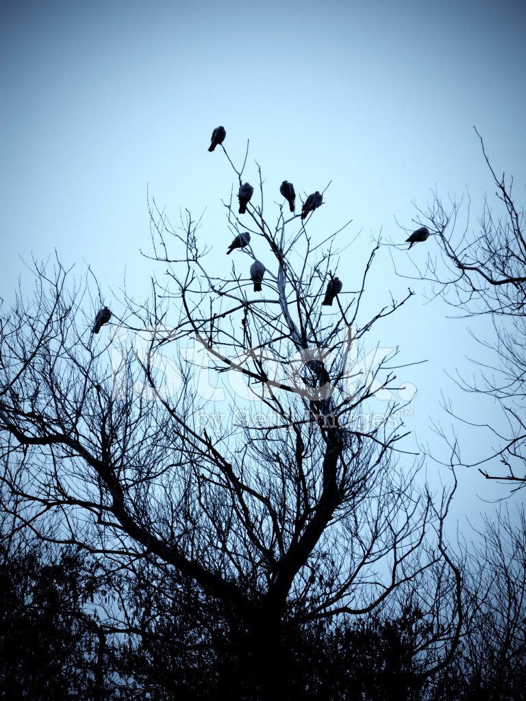 Vögel IN Kahler Baum Warten Auf Den Sturm Stockfotos - FreeImages.com