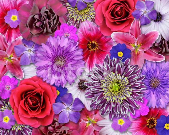 Red Pink Purple Flower Background Stock Photos