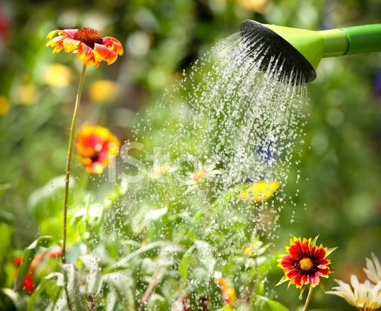 цветы без воды фото
