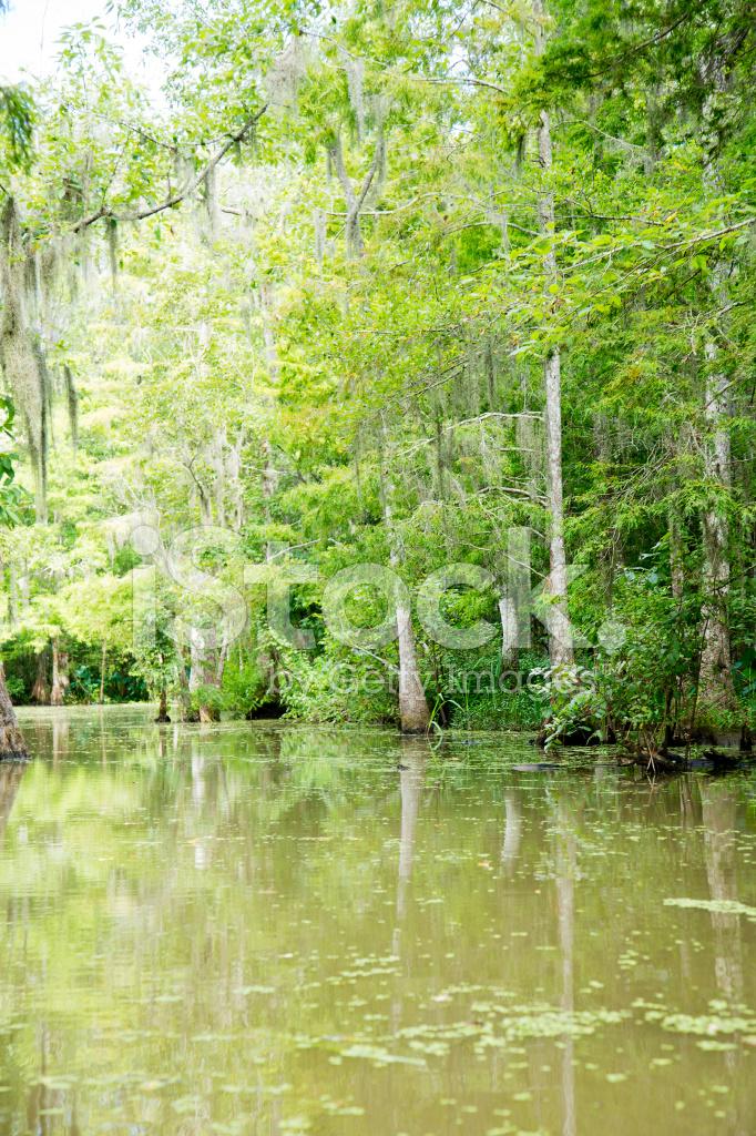 Bald Cypress Swamp IN Louisiana Stock Photos FreeImagescom