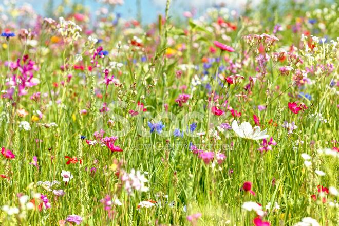 Prato Di Fiori Fotografie stock - FreeImages.com