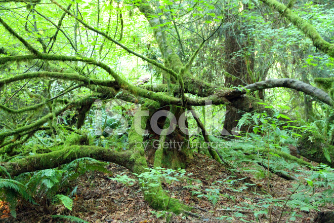 Tangled Wood Stock Photos Freeimages Com
