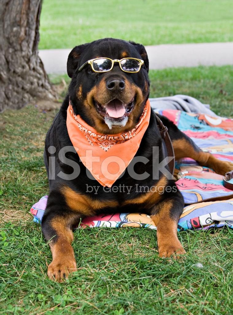 rottweiler dog names - 742×932