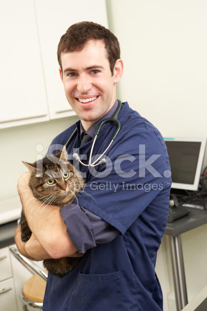 男性の獣医外科医手術で猫を保持...